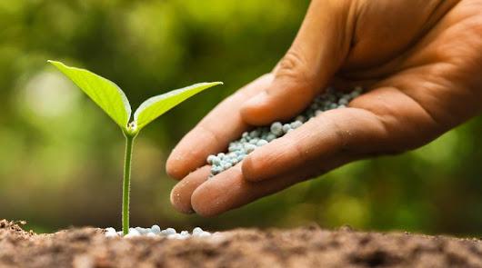 Los semilleros investigan cada año cientos de nuevos productos