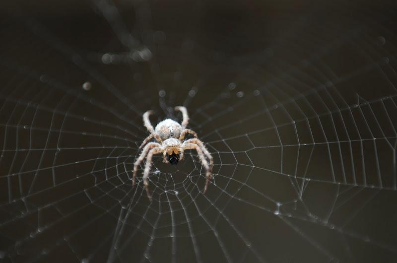 Photo: Spider 4 przyjaciel z pracowni