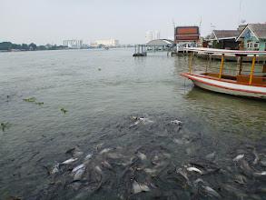 Photo: Ryb je tu opravdu požehnaně.