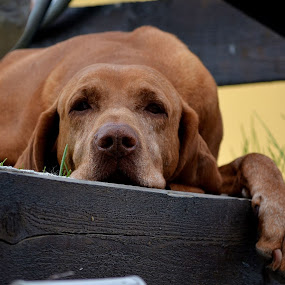 Pana una alta, buna dimineata!!!! by Ciupe Simona - Animals - Dogs Portraits