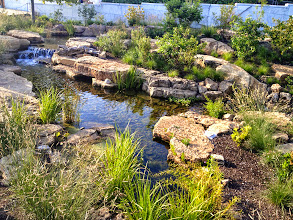 Photo: Acorn Ponds & #Waterfalls, we install ponds, water features and low maintenance water gardens. Renovation and maintenance are our specialties. Check out our website www.acornponds.com and give us a call 585.442.6373.   Aquascape Ecosystem #PondInstallation at the Shedd Aquarium in Chicago, only one year later!  To learn more about Pond Installations, please click here: www.acornponds.com/ponds.html  Interested in a Waterfalls without the pond? Please click here: www.acornponds.com/pondless-waterfalls.html  For more info about this project, please click here: www.facebook.com/notes/acorn-landscaping-landscape-designlightingbackyard-water-gardens/certified-aquascape-contractor-rochester-nyshedd-aquarium-water-feature-pondacor/333157806721348  Sign up for your personal design consultation here: www.acornponds.com/contact-us.html  Check out our photo albums on Pinterest here: www.pinterest.com/acornlandscape/  Click here for a free Magazine all about Ponds and Water Features: http://flip.it/gsrNN  Acorn Ponds & Waterfalls   585.442.6373 www.acornponds.com