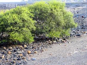Photo: Promenade sea side no more dirt on beach