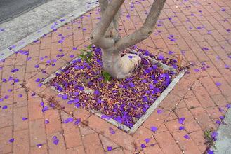 Photo: Flower deadfall Santa Barbara, California, June 20, 2012.