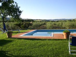 Photo: Davanti alla piscina il nostro l'olivetoGirasole saturnia agriturismo
