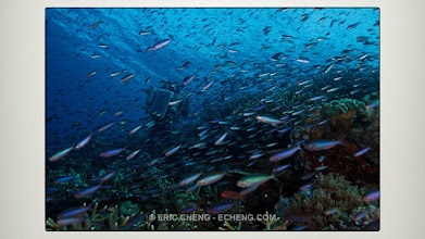 Photo: Take step back for moment and ask ourselves what is it about the ocean that captivates us? Photographer Tony Wu, in the Eastern Fields of Papua New Guinea.