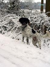 Photo: FERRE in de sneeuw
