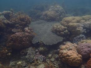Photo: Reef, Sand Island, Palawan, Philippines.