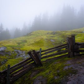 Box Canyon Loop Trail by Erik Lykins - Landscapes Mountains & Hills ( haze, 20mm, mountain, tranquil scene, national parks, hilly, landscape, usa, spring, hiking, washington, mountains, mt. rainier national park, no people, trail, wet, pacific northwest, hazy, hill, green, forest, rural, fence, national park, foggy, north america, fog, mt. rainier, outdoors, d7000, trees, day, wa, box canyon loop, 20mm/f2.8, outside )