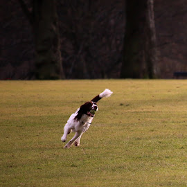 by Luz UK - Animals - Dogs Playing