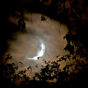 Solar Eclipse by Jud Joyce - Landscapes Starscapes ( moon, trees, night, sun, eclipse )