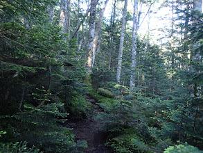 雰囲気の良い林を進む