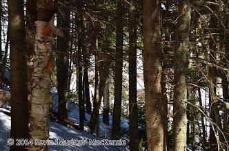 Photo: Sabretooth W Slide peeking through the trees.