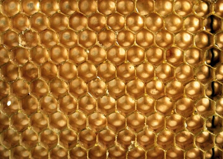 Celle d'oro di cortomaltese