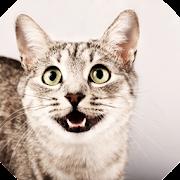 Cat Phrasebook