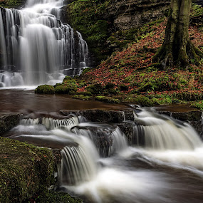 Scaleber Falls by Phil Green - Landscapes Waterscapes ( cascades, yorkshire dales, waterfall, scaleber falls, autumn )