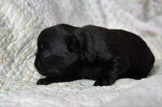Photo: Female 14 days old