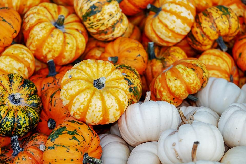 Courges, potimarrons et potirons : de quoi faire de délicieux repas d'Halloween !