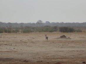 Photo: In the meantime, a kudu approaches the waterhole.