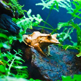 by Alex Ornelas - Animals Amphibians