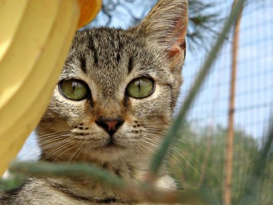 Gli occhi dei gatti sono sempre sinceri di Laura1992l