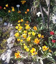 Photo: F4234105 w Ogrodzie Botanicznym