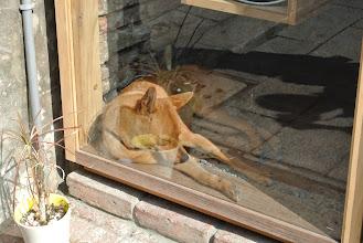 Photo: 睡得正香甜的狗狗