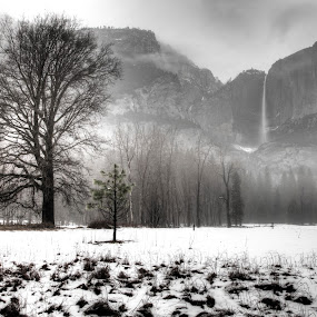 Yosemite Winter by Surentharan Murthi - Landscapes Forests
