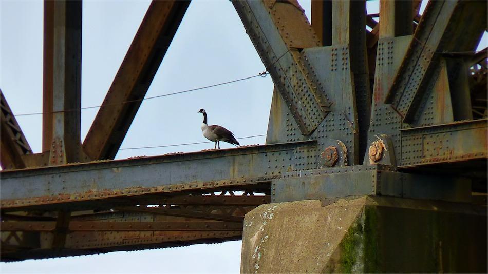 Goose and Girders.jpg