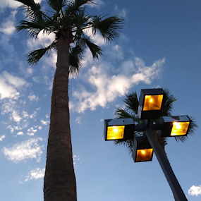 Fraternal Twins by Carlo McCoy - Instagram & Mobile Android ( outdoor, phoenix, cool shots, blue skies, arizona, palm, tall, camouflage, desert, trees, lights,  )