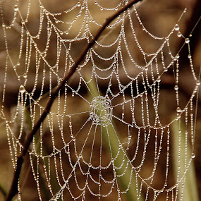 Necklace of Nature by Sumitro Mukherjee - Nature Up Close Water ( water, nature, spiderweb, dewdrops, close up,  )