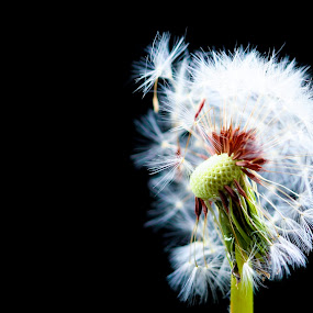 by Fareena Saeed - Nature Up Close Flowers - 2011-2013