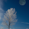 Trees with Moon.jpg