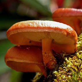 Mushroom by Abhishek Ghosh - Nature Up Close Mushrooms & Fungi