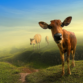 Hey, What's Up..? by Ketut Manik - Animals Other