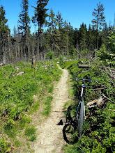 Photo: Na zielonym, szlak przyjemny, ale nadmierne cywilizowanie go trochę odbiera przyjemność z jazdy. Ale cóż klient nasz Pan.