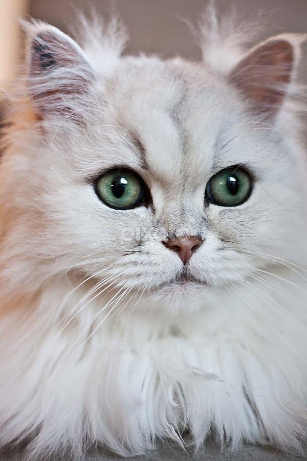 by Frodi Brinks - Animals - Cats Portraits
