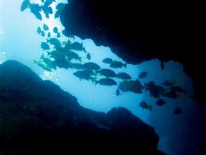 Photo: In the waters around Kauai.
