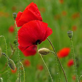 by Renata Kučan - Flowers Flowers in the Wild