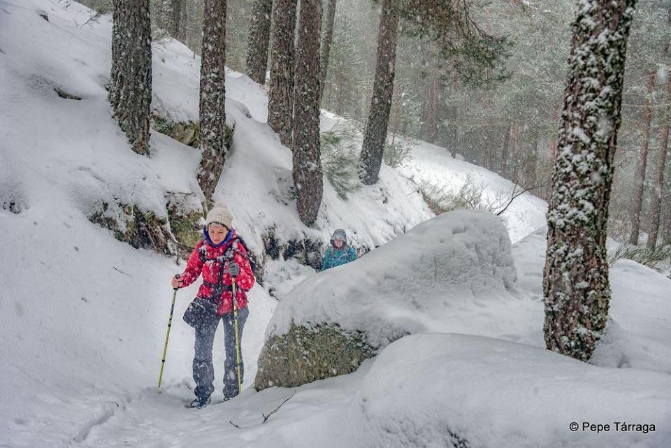 La imagen puede contener: nieve, árbol, planta, exterior y naturaleza