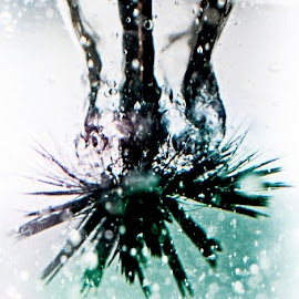 Brush by Soyam Chhatrapati - Artistic Objects Other Objects ( water, creative, splash, brush, creativity )