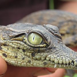 by Geraldine Angove - Animals Reptiles