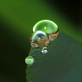 Water drops on leaf by Paramasivam Tharumalingam - Nature Up Close Water