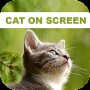 Funny Cat Walks On Phone Screen: Cute Joke