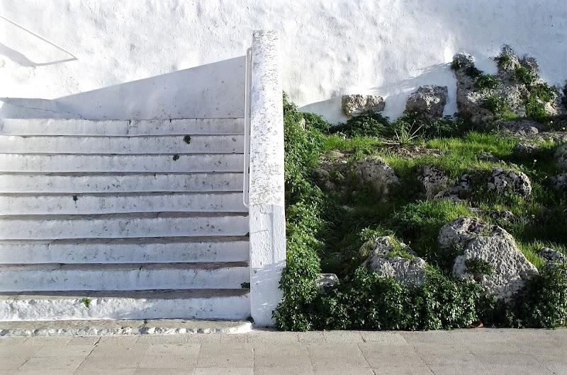 white or green di chiara_t_