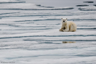 Photo: Arctic Expedition 2009