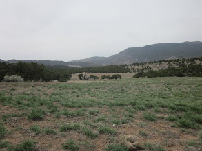 Photo: Several areas of nice open meadows