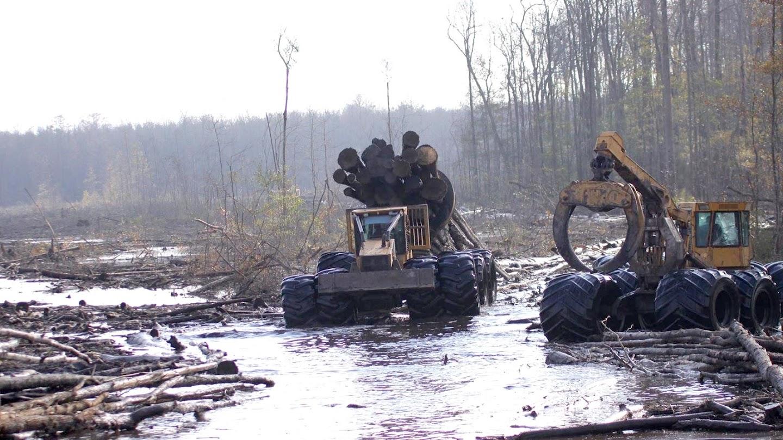 Watch Swamp Loggers live