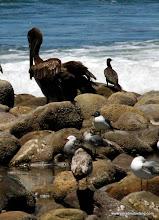 Photo: More waterbirds on Matanchen Bay