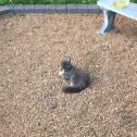 Feral Cat(s)