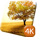 Beautiful Tree 4K Live Wallpap icon